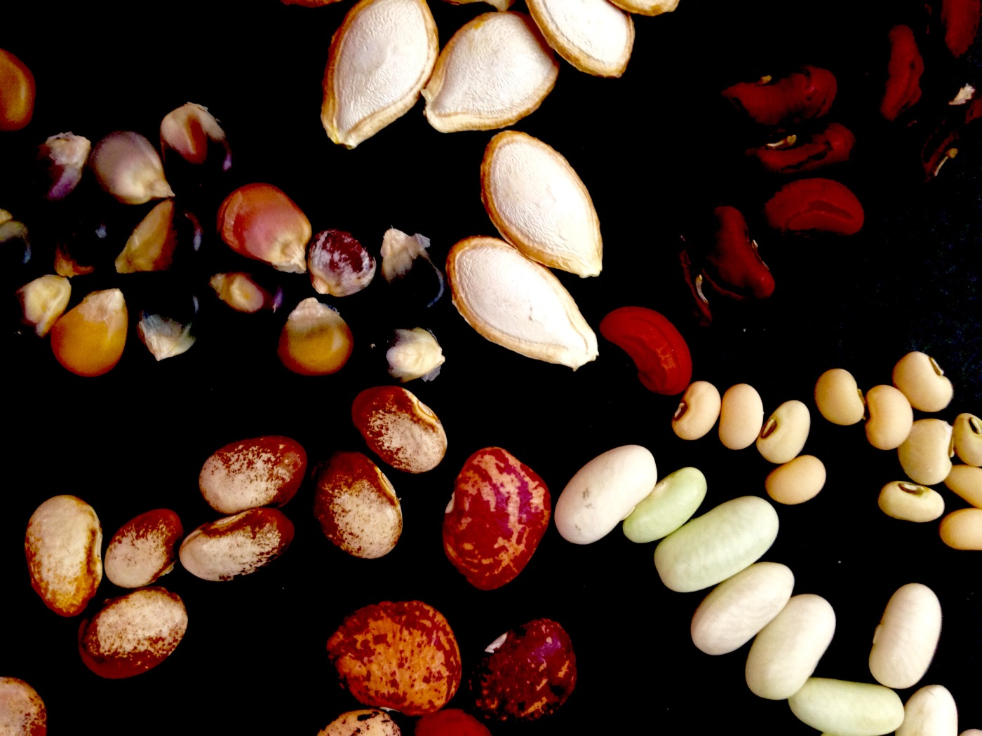 pretty vegetable seeds