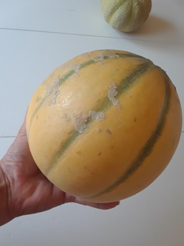 Alvero melon