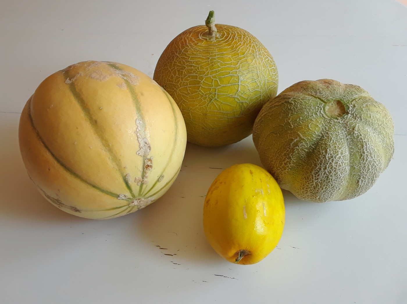 Mini melons