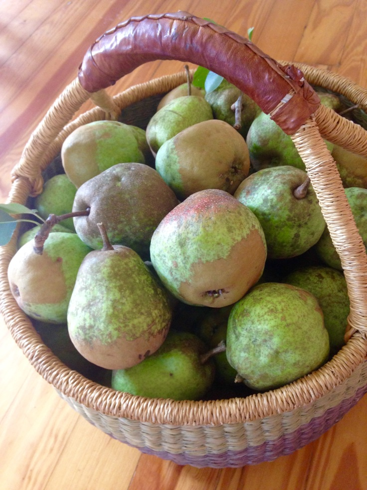 Basket full of green pears